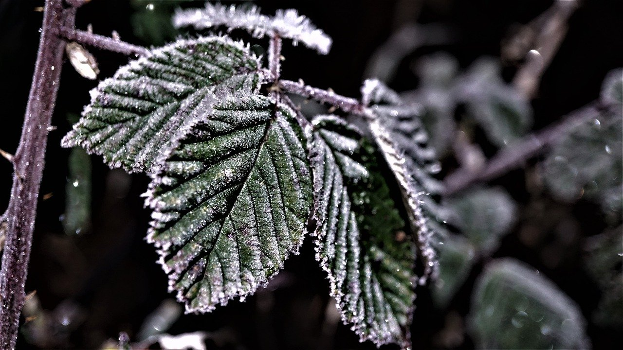 frost-weather