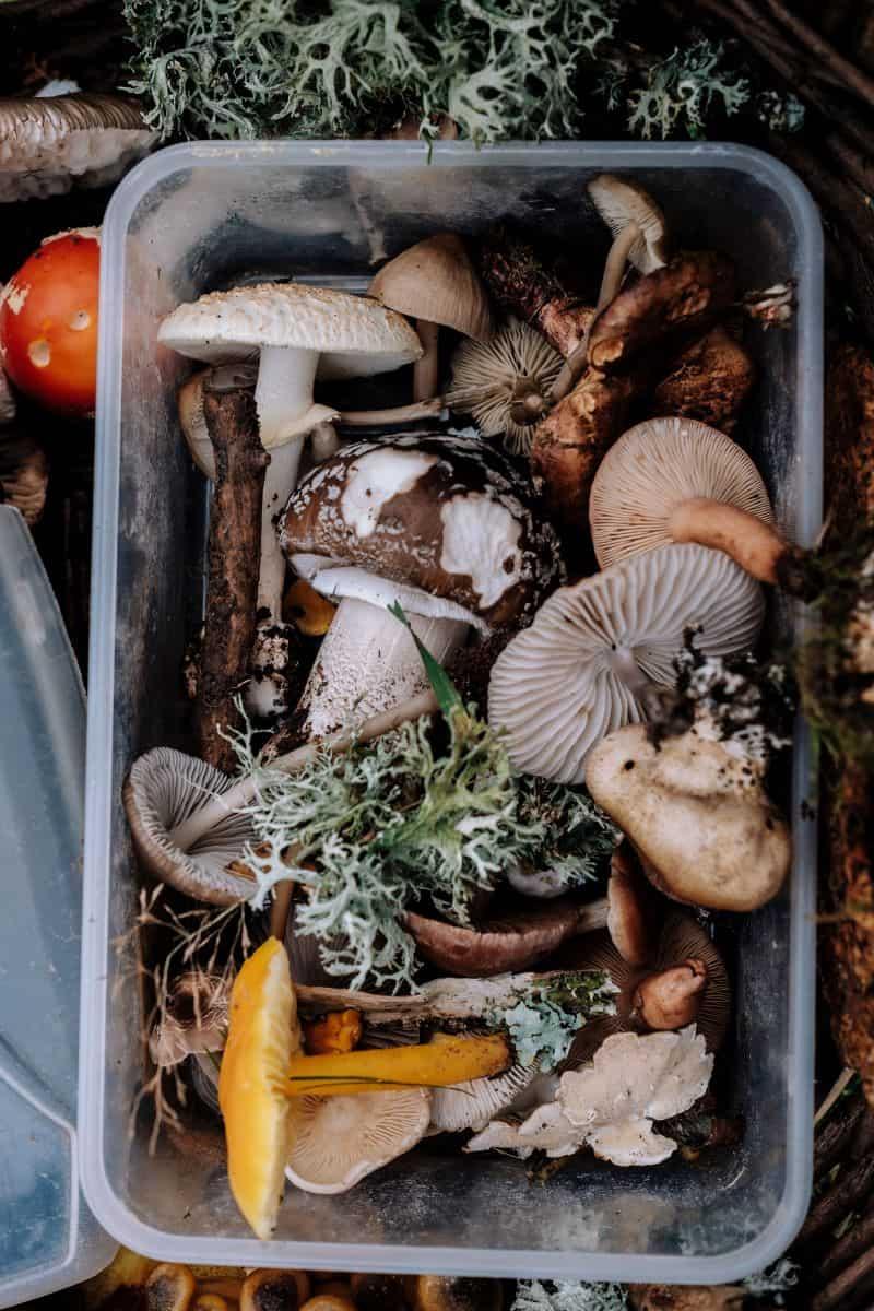grow mushroom indoor