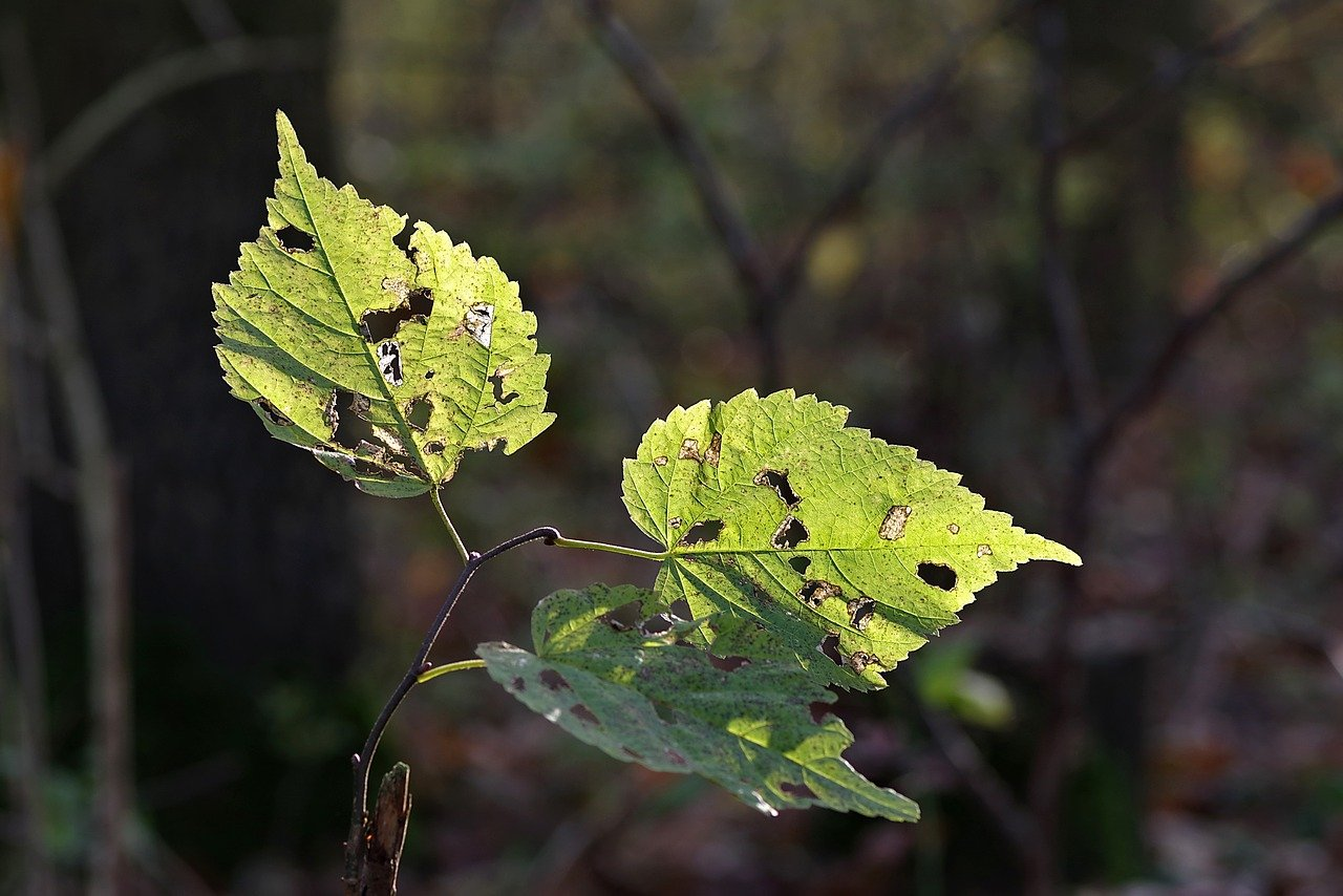 plant leaves with holes