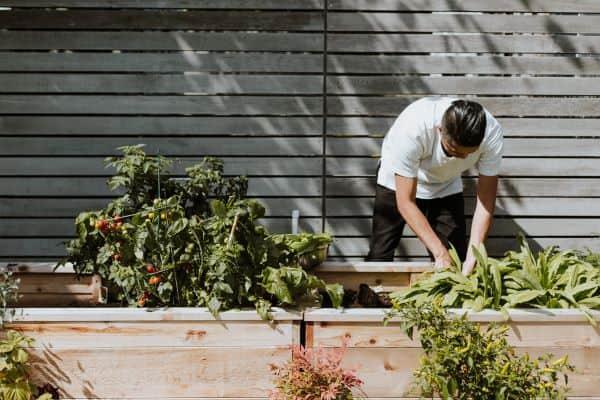 raised bed for indoor vegetable gardening