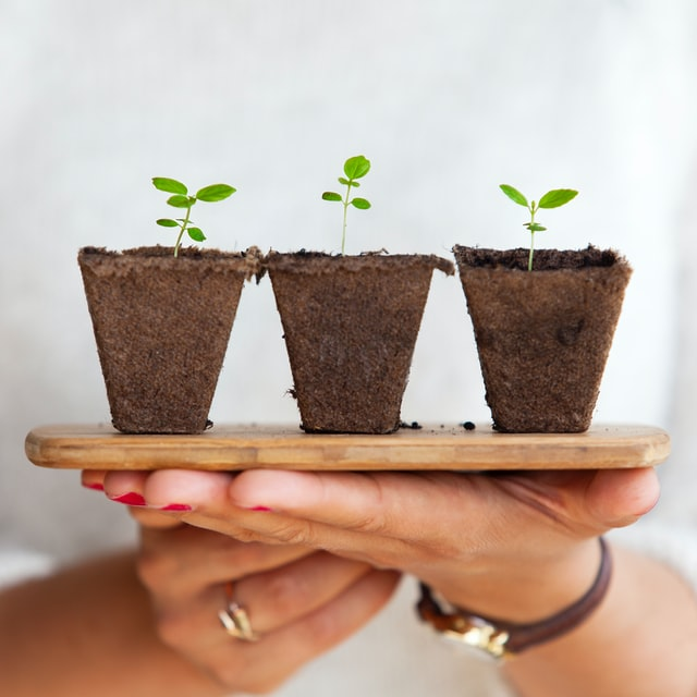 move seedlings to containers