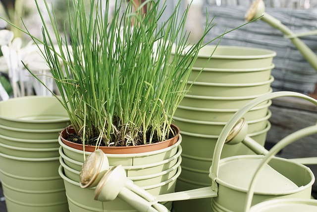 what do you need for growing chives