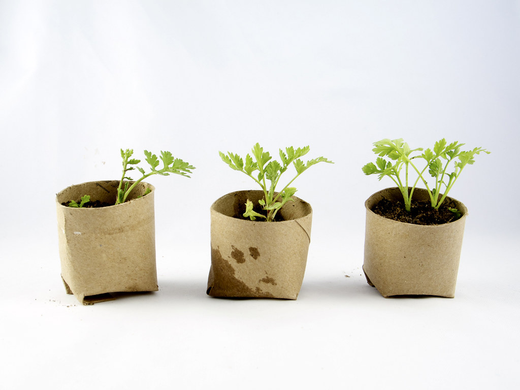 Creating pots from toilet paper