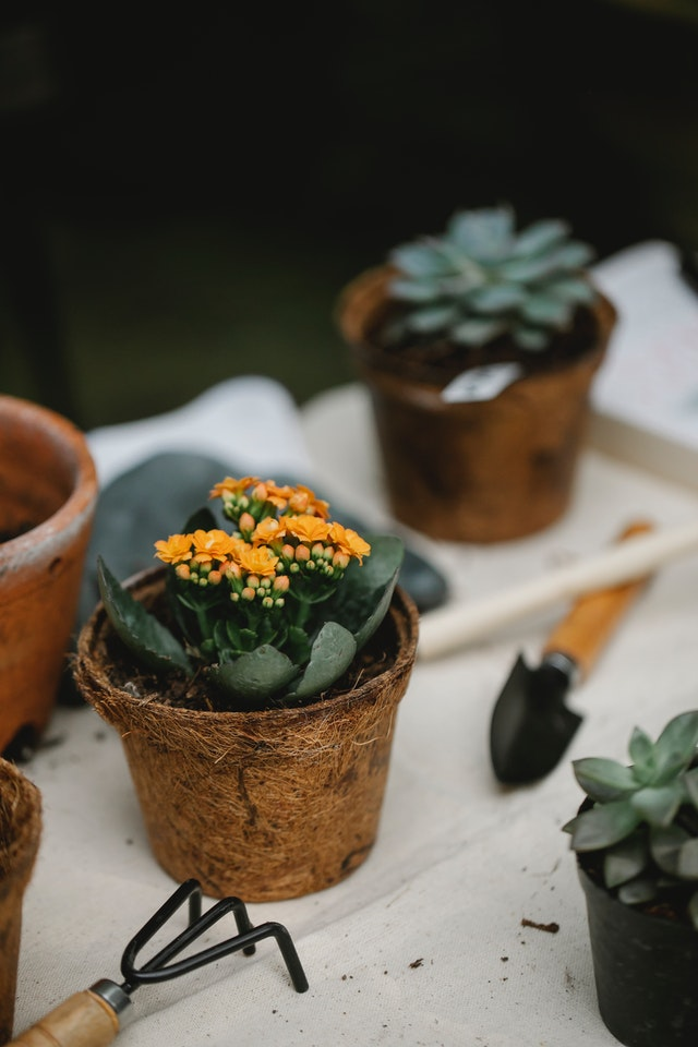 how to use peat pots