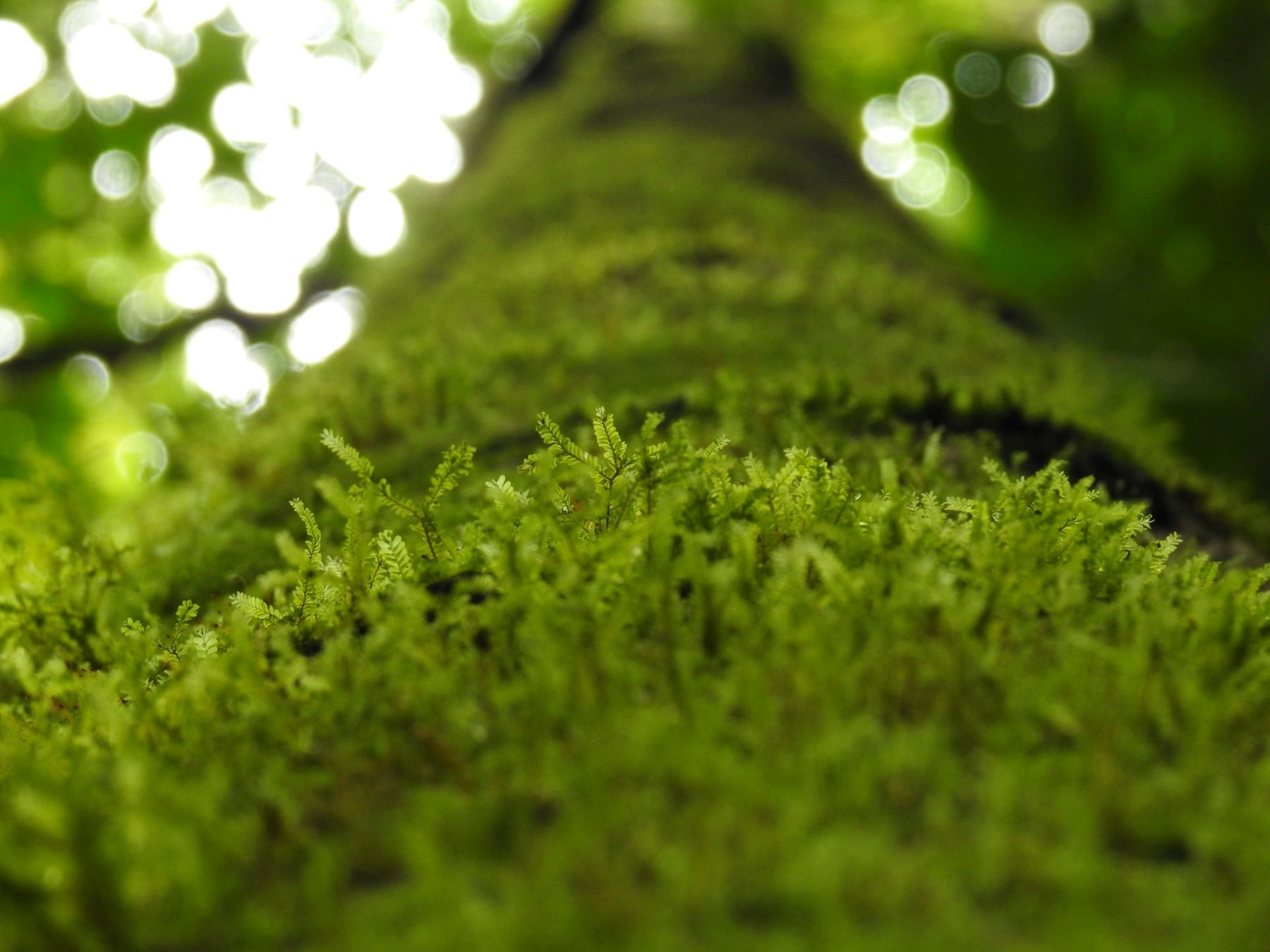 what is peat moss