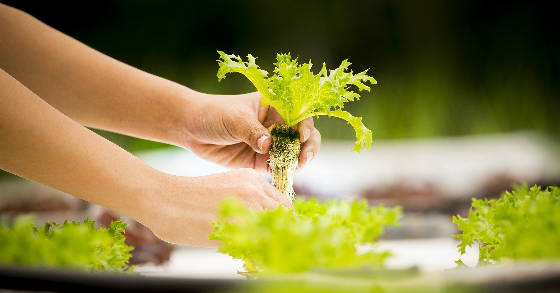 6 types of hydroponics systems