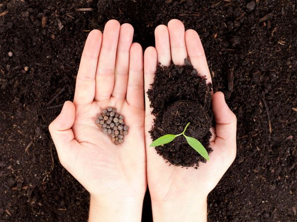 seeds vs seedling