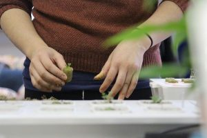 Starting Seeds for Hydroponics: Do's and Don'ts of Germination