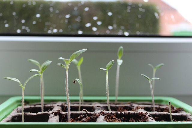 plants that needs light