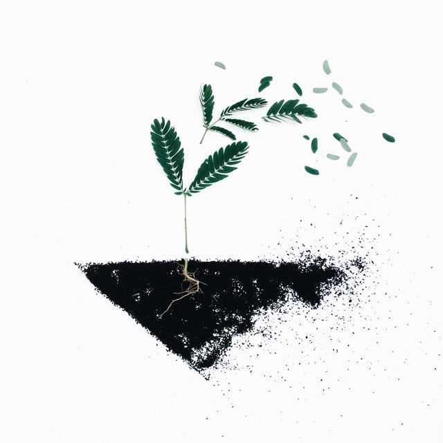 seeds that needs darkness
