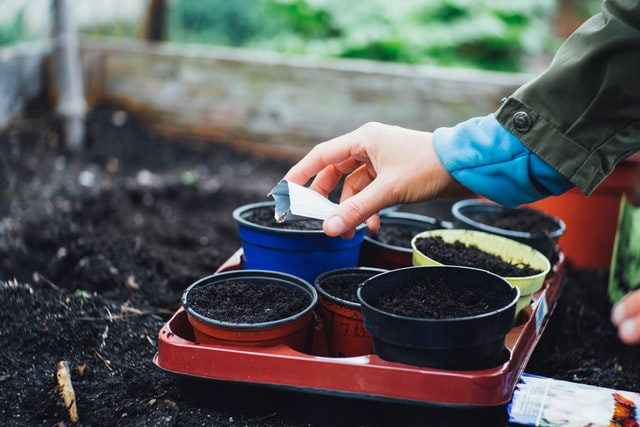 seeds that needs light to germinate